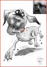 Chester dog